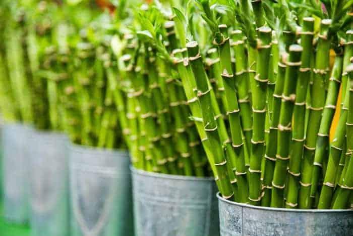 funciones del bambú